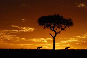 Life Nature Safaris